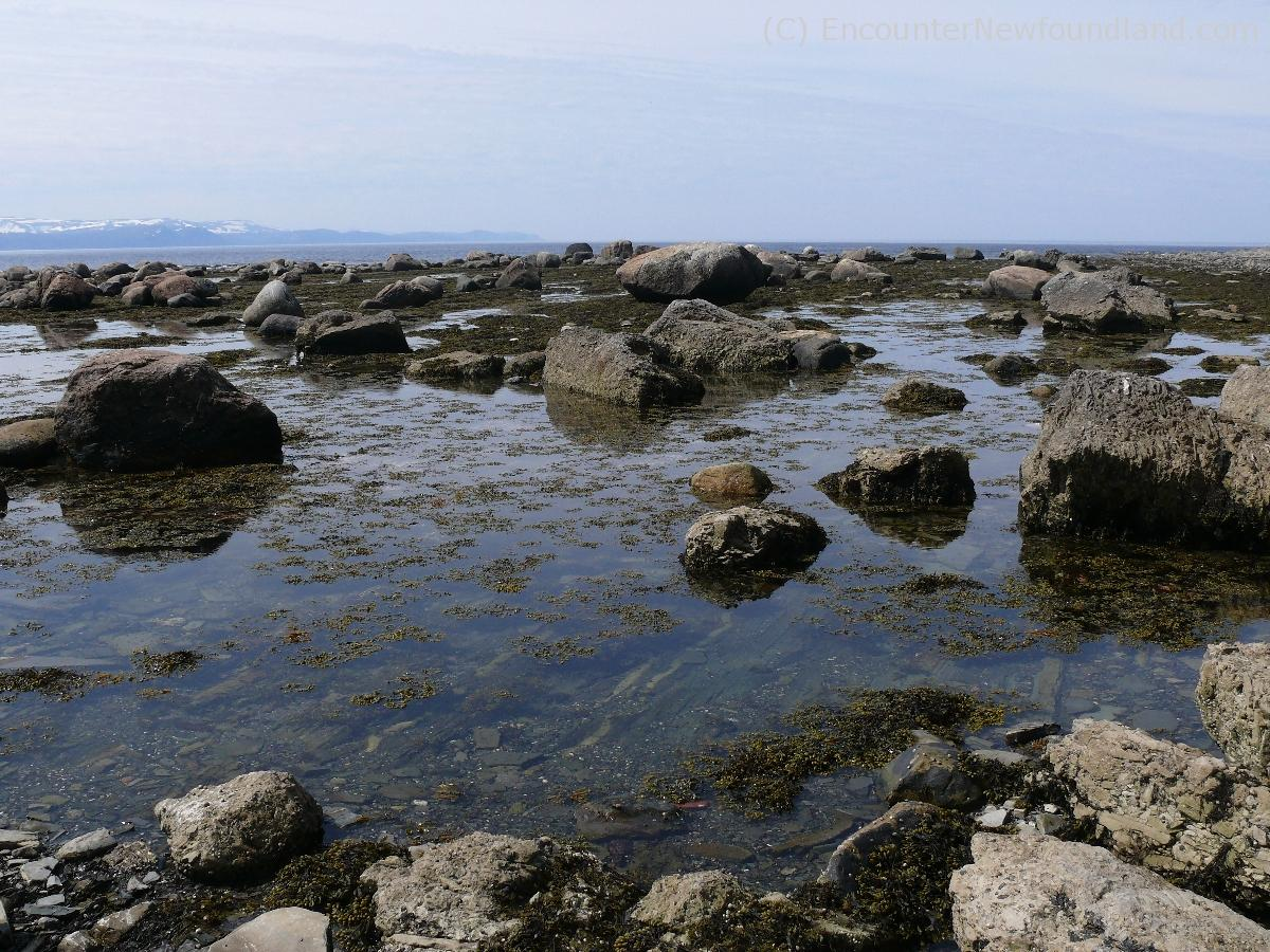 Rocks and seaweed