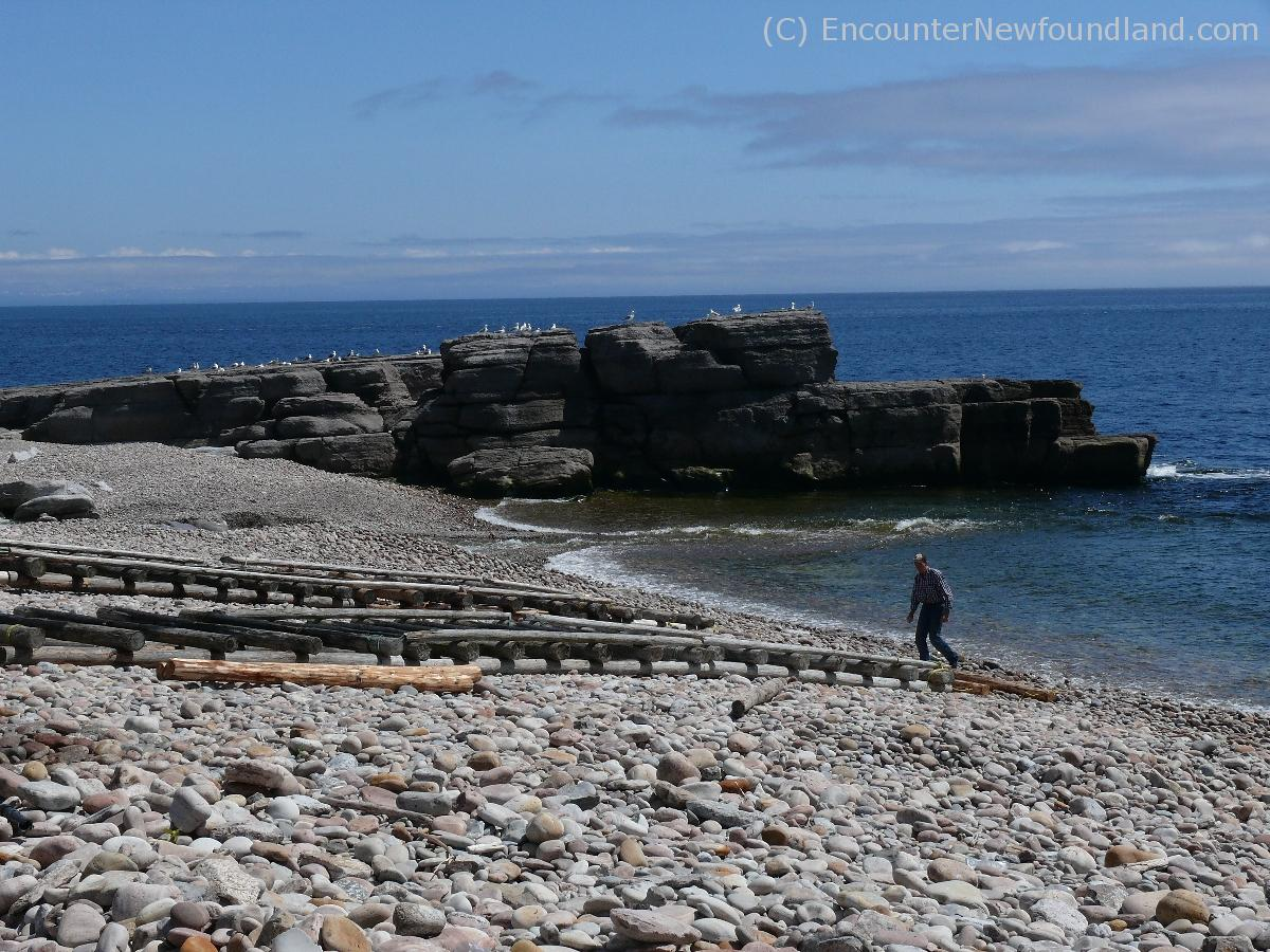 Seabirds on the rocks