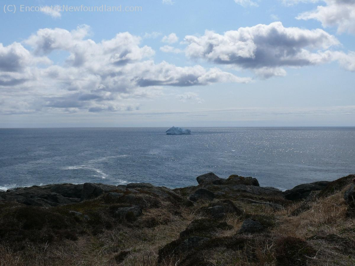 Iceberg off St. Anthony