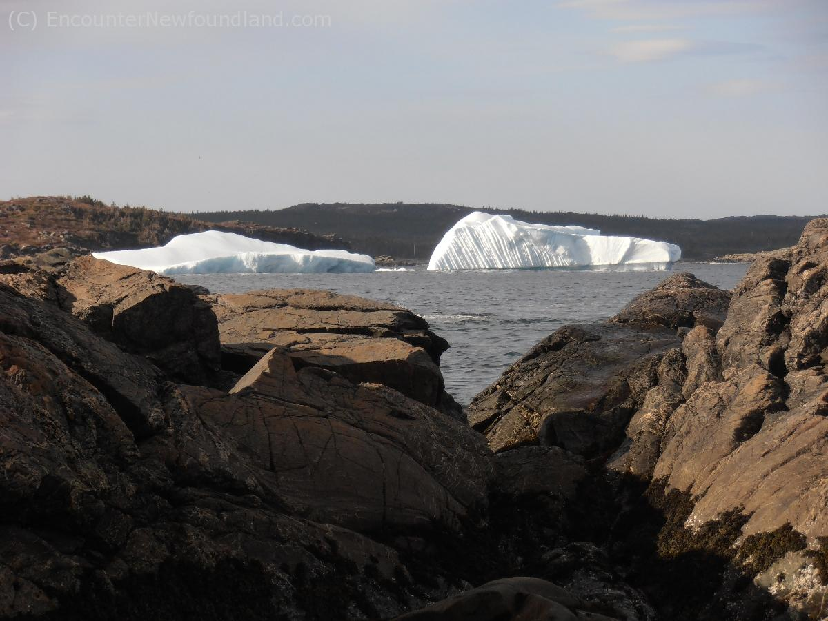 Icebergs in St. Anthony Bight