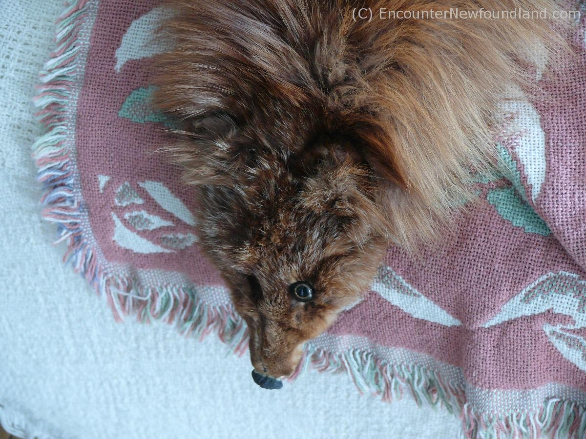 Lady Grenfell's Fox Fur