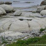 Thrombolites in Flower's Cove, Newfoundland
