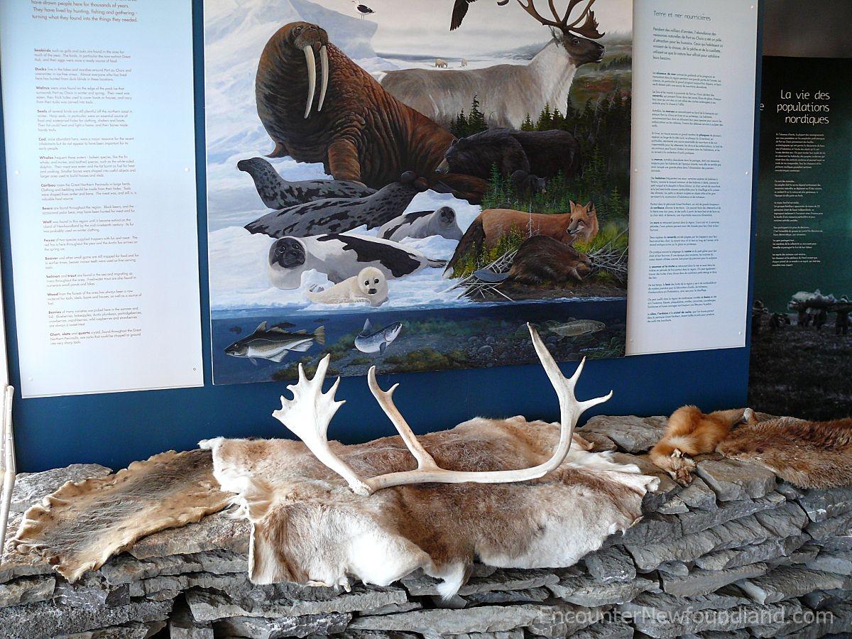 Animal skin display
